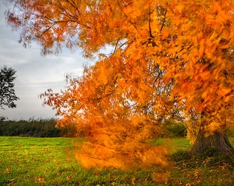 Orange Fall Lone Tree Fine Art Landscape Photography, Large Wall Art, Autumn Theme