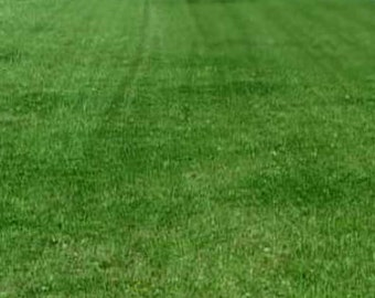 Contractor Grass Seed Mixture - Northern