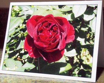 Blank Greeting Card - Rose