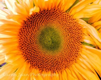 Sunflower Up Close and Personal