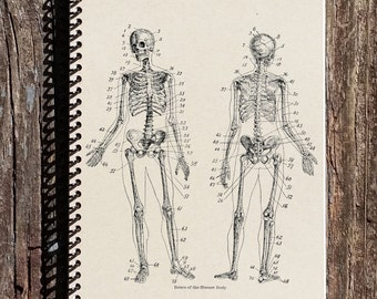 Skeletal Anatomy Journal - Skeletal Anatomy Notebook - Skeleton - Bones