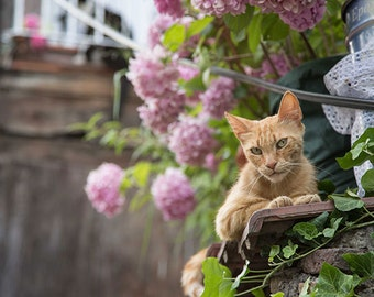 CAT Photo, STRAY Cat, Istanbul Cat, instant download, wall art, decorative art