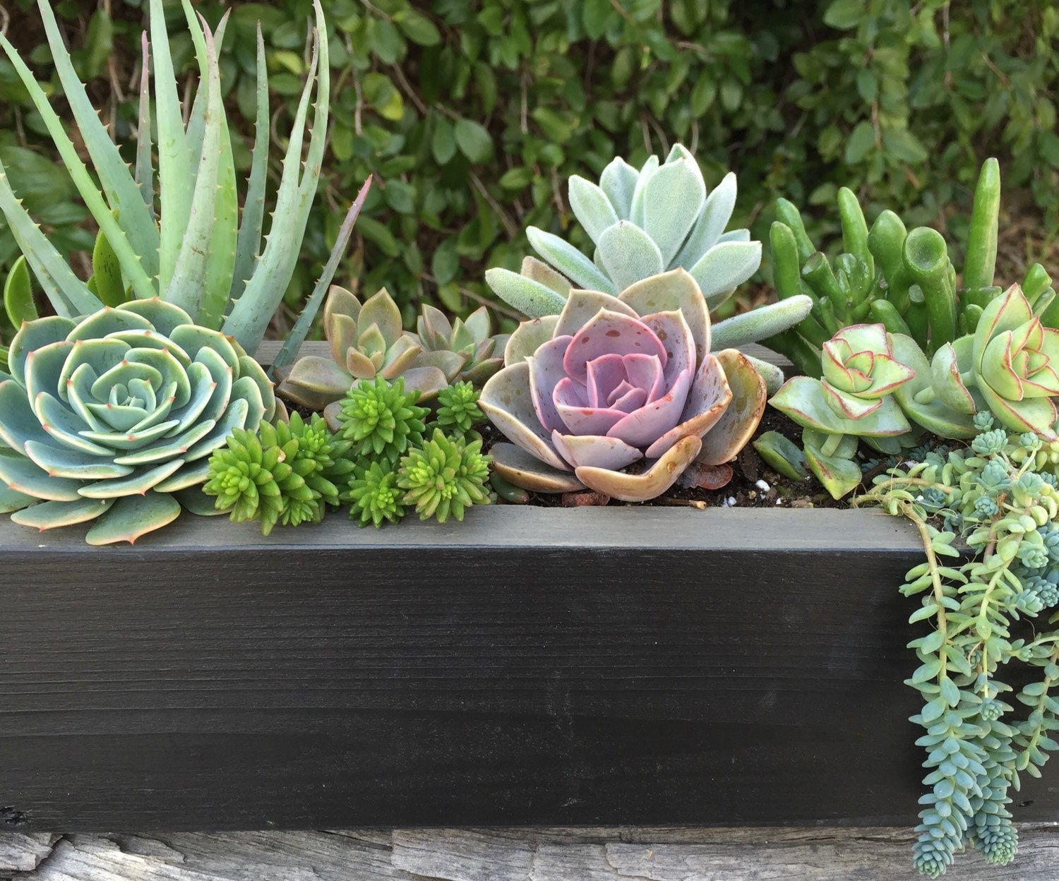 Rustic chalkboard planter box by succulent charm succulent Planters for succulents