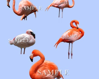 Flamingo overlays