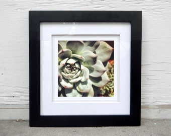 Succulant botanical fine art photography print for the home, office, apartment, nature print, home decor, nature art