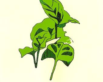 Arrowhead Houseplant Hand Printed Silkscreen Poster