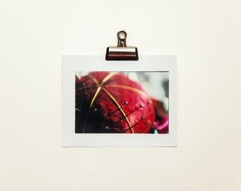 Pincushion 2, 8x10 C-Print, Darkroom Photographic Print, Still Life Photography