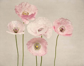 Poppy Art Print, Pale Pink, Taupe, Girls Room, Wall Art, Feminine, Flower Photography, Floral Art, Poppy Photography, Fine Art Print
