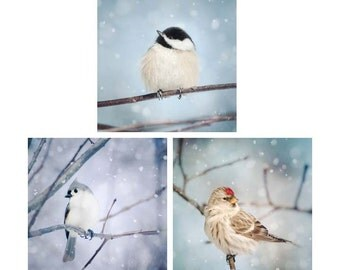 Winter Print Set, Winter Decor, Birds in Snow, Bird Photography, Wall Art, Photography Prints, Set of 3 Prints