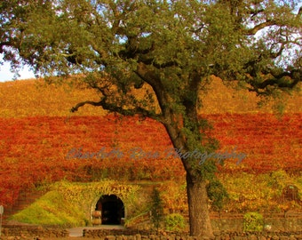 California Vineyards Wine Cave