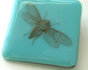 Cicada Coaster - Fused Glass - Light Cyan with Vintage Graphic of Cicada