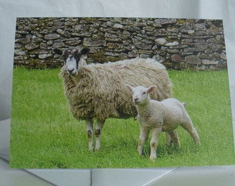 Sheep and Lamb Card, Greetings Card, Blank Card, Nature Photography Card, Mother and Baby Animals