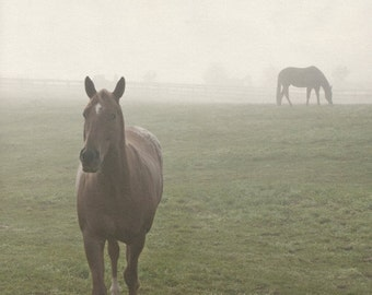 Horse Fog Photography Rustic Landscape Photo Green Gray Brown Horses Wall Art - 8x8 inch fine art photography print - Memories in the Mist