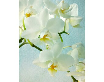 White Orchid Print, Orchid Art Decor, Flower Photography, Fine Art Flower Decor, Floral Wall Art, White Mint Floral Decor