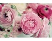 Flower Photography, Still Life, Pink Ranunculus, Floral, Shabby Chic, Romantic, Home Decor, Wall Art, Rose, Fine Art Print, Pretty