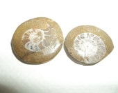 Pair Ammonite Fossil  Spiral Gemstone Shell Nautilus Nautical Ocean Life Crystal Specimen For Wire Wrap