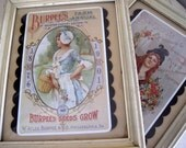 Pair of Burpee's Seed Card Framed in Shadow Box