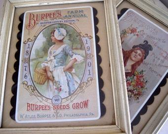 Pair of Burpee's Seed Card Framed in Shadow Box