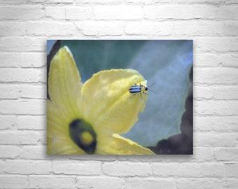 Ladybug Artwork, Cute Art, Yellow Art, Green Art, Nature Photography, Insect Art, Garden Art, Fine Art Photography, Cute Bugs