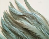 RUSTICA COQUE TAIL Feathers , Rustic Ice Blue  / 1313