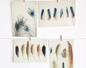 Postcard Set, Feather Photography, Nature Photo, Shades of Brown and Blue, Affordable Art - Feather Collection
