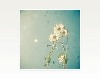 Daisy Photography, Flower Art, Dreamy, Bedroom Art, Summer, Floral, Blue and White Wall Decor - The Daisy Family