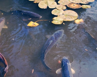 Koi Pond No. 2
