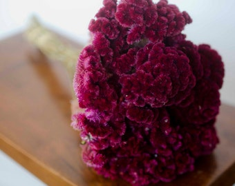 Dried Merlot/Burgundy Cockscomb, burgundy cockscomb, dried cockscomb, Dried celosia, burgundy celosia, coxcomb. burgundy coxcomb
