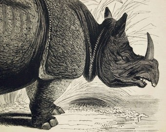 1840s-1850s Antique Engraving of the Rhinoceros