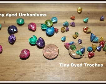Umboniums-Colorful Trochus shells-Tiny sea shells-Ocean shells-1 pound bags-Vase fillers-Dyed umboniums-Dyed Trochus shells-Fai...