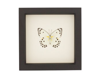 3D Butterfly Wall Art Real Insect Framed Display