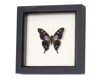3D Wall Art Insect Entomology Shadow Box Display