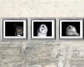 Owl Photos Gift Set - Three 8x10 Black and White Owl Prints - Owl Art Bird Decor