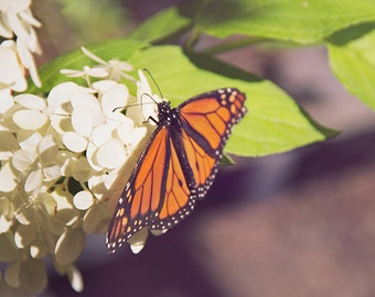 Butterfly Photography, Monarch Photograph, Nature Photography, Still Life, Natural, Macro Photo, Soft Delicate, Whimsical, Nursery Art