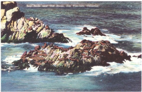Vintage California Postcard - Seal Rocks in San Francisco (Unused)