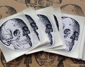 Anatomical Skull Stickers x 15/ Skull Labels/ Stationery/ Skull Stickers/