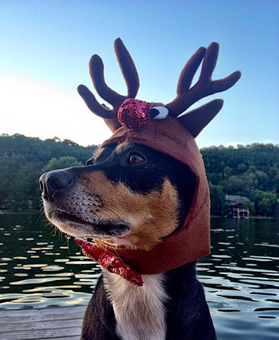 Reindeer Antlers for dogs and cats/Rudolph the red nosed reindeer hat for cats and dogs