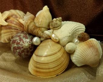 Sea shell, pearls and starfish barrette, fascinator.