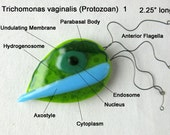 Trichomonas Protozoan Pendant Magnet Pin
