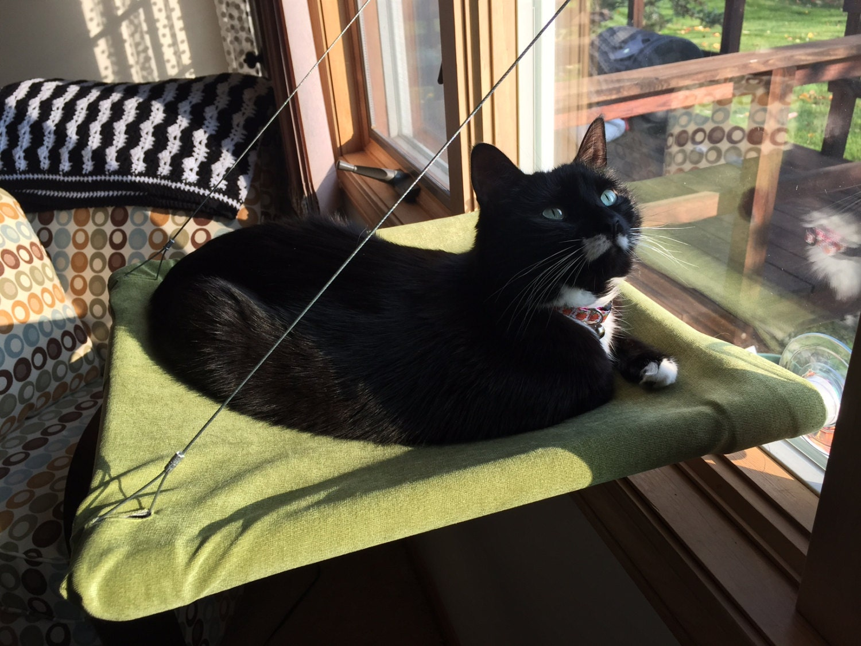 faux suede curious cats window perch. Black Bedroom Furniture Sets. Home Design Ideas