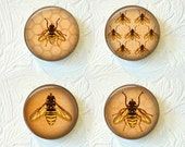 Bee Magnets Set Of 4 1.5 inch  Buy 3 Get 1 Free   370M