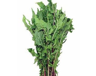 French Dandelion Seeds - Untreated and Non-GMO