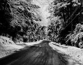 Into The Woods Black & White Photography  - Landscape Print - Snow Scene -  Decor -Winter Trees - New England - Dirt Road Winter Drive