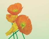 CROWDED POPPIES, fine art photograph, home decor, flower photograph, orange, yellow