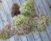 Dried Hydrangeas Light Green, Mauve, Brown, Purple Colored Flowers 6 Stems