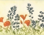 Lupines and California Poppies, Original Fine Art Etching
