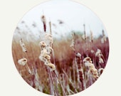 field, reeds, nature, brown, round print, fine art photography, large wall art