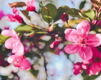 FLOWER Photography, Think SPRING, GARDEN Nature Landscape Floral Bud Blossom, Pink, Blue, Green