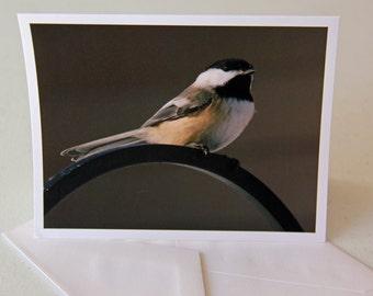 Chickadee-Bird-Wildlife-Nature-Notecard-card-photo-photography-print-Greeting Card
