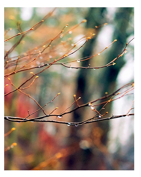 Nature Photography- Fine Art Photography- Fall Color- Branches- Park- Fine Art Print-Raindrops